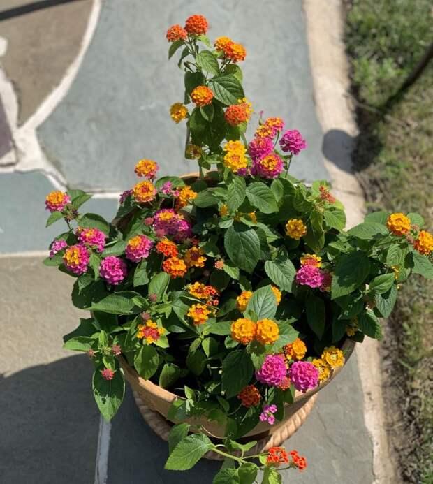 15 оригинальных альтернатив обычным комнатным растениям