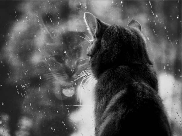 7239060-R3L8T8D-650-cat-waiting-window-59