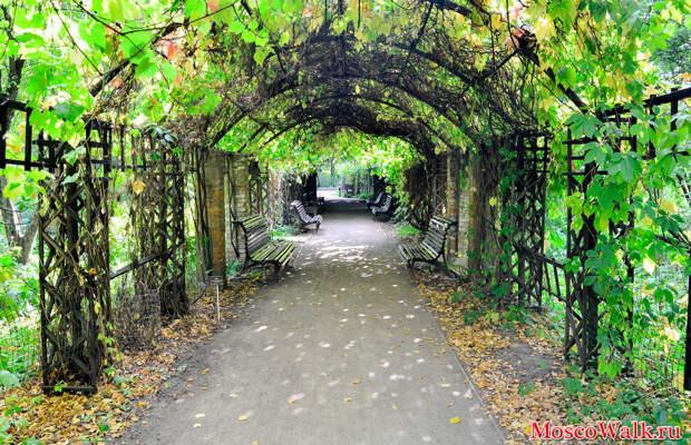 Осенняя пора в Аптекарском огороде