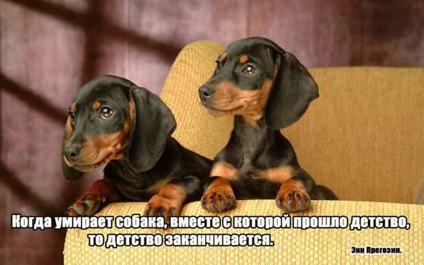 4.  афоризмы, животные, собаки