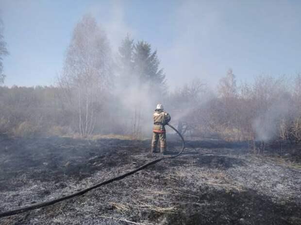 Под Омском спасли ёжика, бегущего вдоль дороги от пожара
