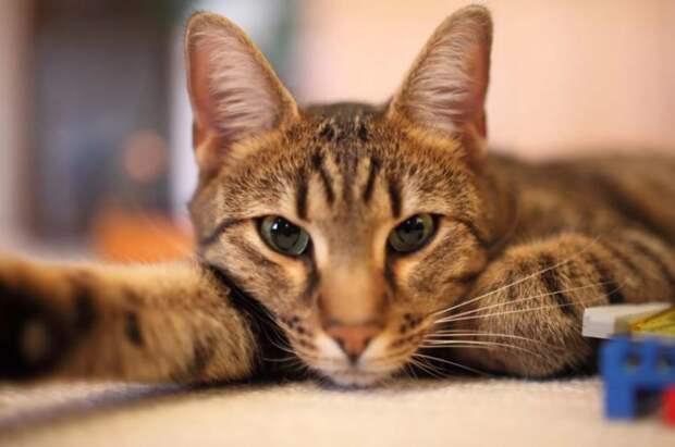 Ученым удалось доказать, что кошки умнее собак