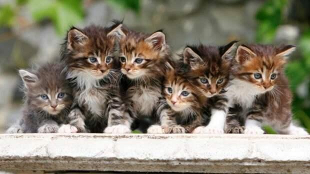 Немецкие тонкости содержания: коты, кошки и котята