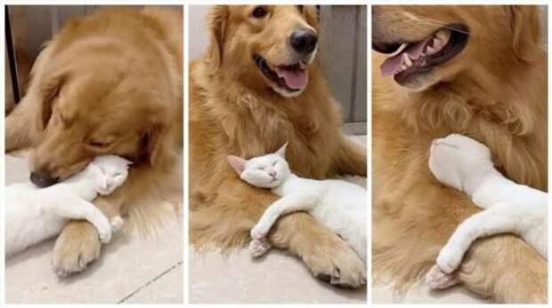 Как выглядит настоящая дружба между кошкой и собакой (4 фото)