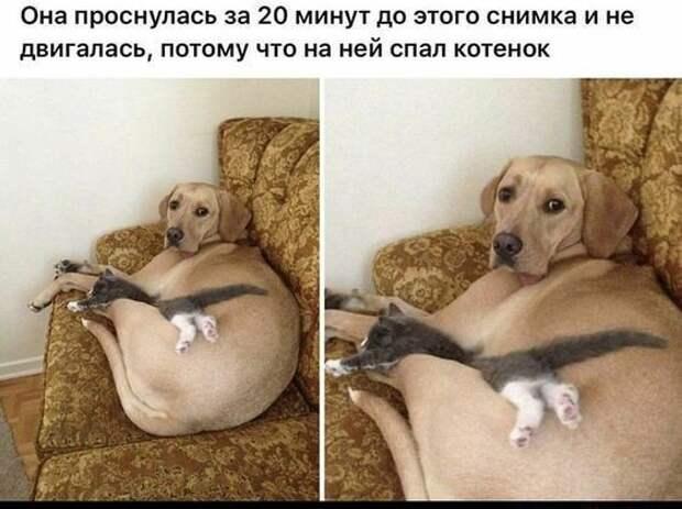 Веселые истории о нас . Животные