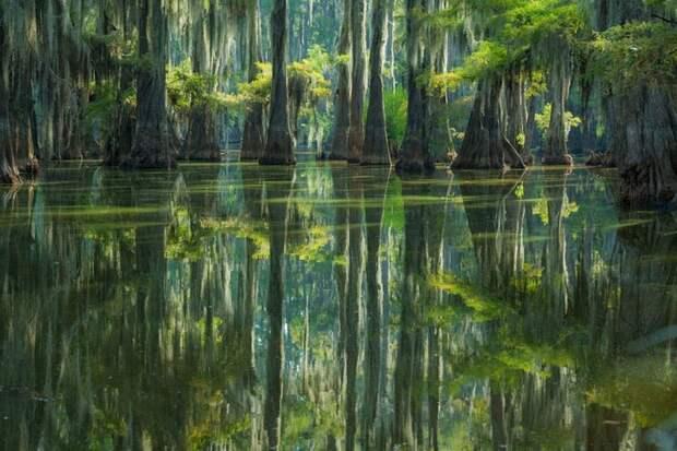 Сказочные кипарисы на озере Каддо… (17 фото)