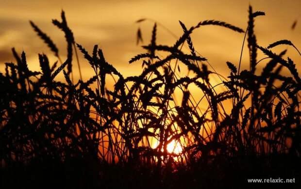 До свиданья, осень (43 фото)