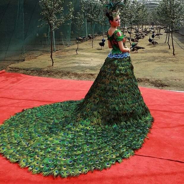 Платье из павлиньих перьев: 1 500 000 долларов