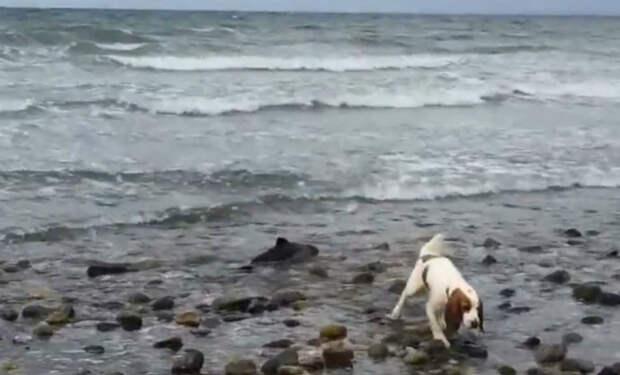 Собака забеспокоилась на пляже и потянула рыбака за собой. На берегу лежал дельфин, которому требовалась помощь