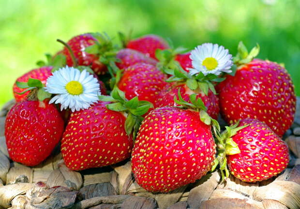 Хитрости,которые позволят вырастить самую крупную и вкусную клубнику быстрее всех