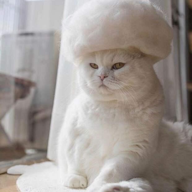 11 милых фото котиков в крутых шапочках, которые хозяин делает из их шерсти