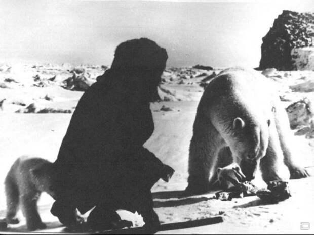 Полярники и медведи  Полярники и медведи, животные
