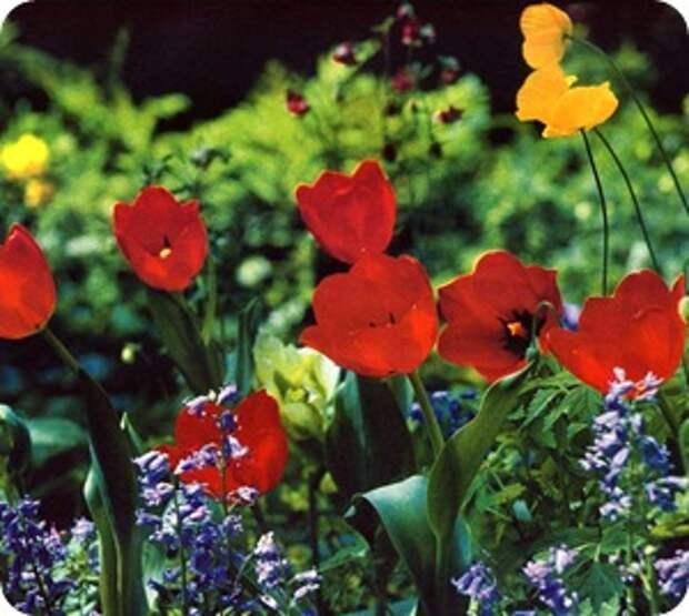 Тенденции в дизайне цветников