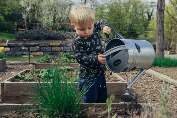 Агроном рассказал, как защитить рассаду от возвратных заморозков
