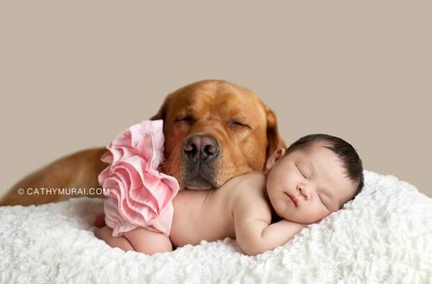 младенцы и собаки первая фотосессия (10)