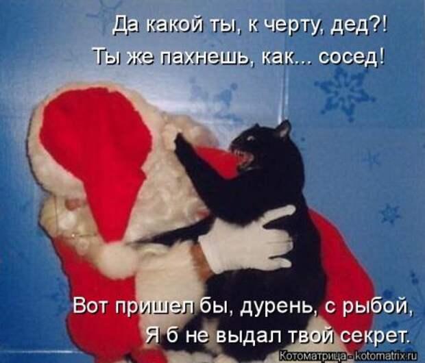 1451492500_kotomatritsa_rr