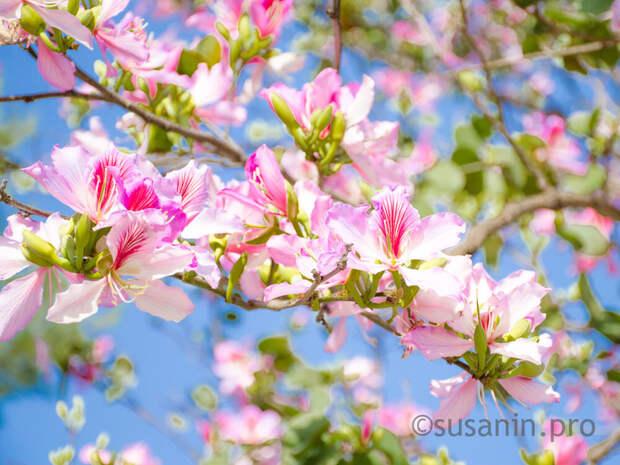 Каникулы: сколько дней будут отдыхать жители Удмуртии в мае