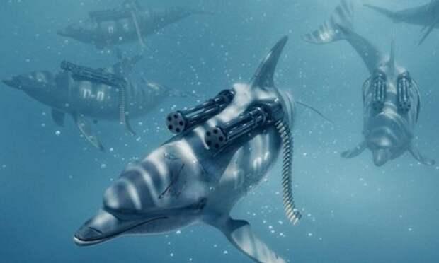 Kryimskie-boevyie-delfinyi.jpg