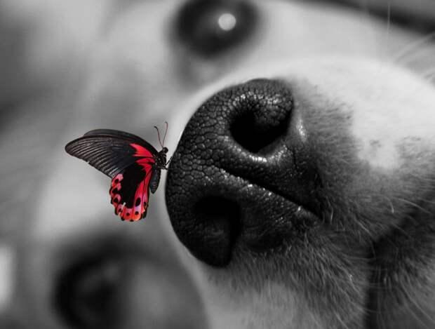 Собаки, которые везде суют свой нос! Очаровательные стоп-кадры из жизни