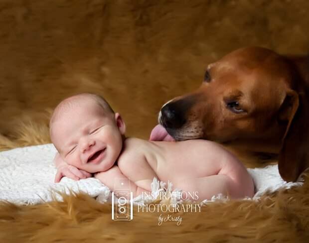 младенцы и собаки первая фотосессия (17)
