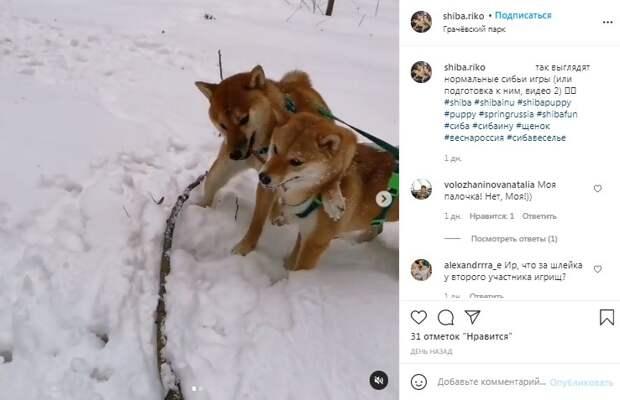 Фото дня: два «японца» не поделили палку в «Грачевке»