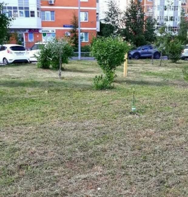 На Дмитровском коммунальщики покосили траву