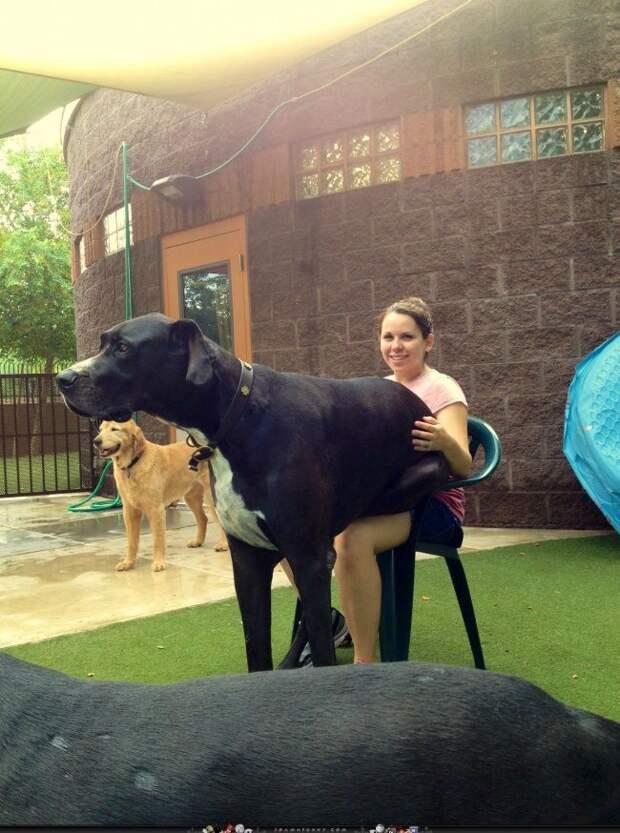 20огромных собак, которые все еще щенки вдуше собака, щенок, позитив