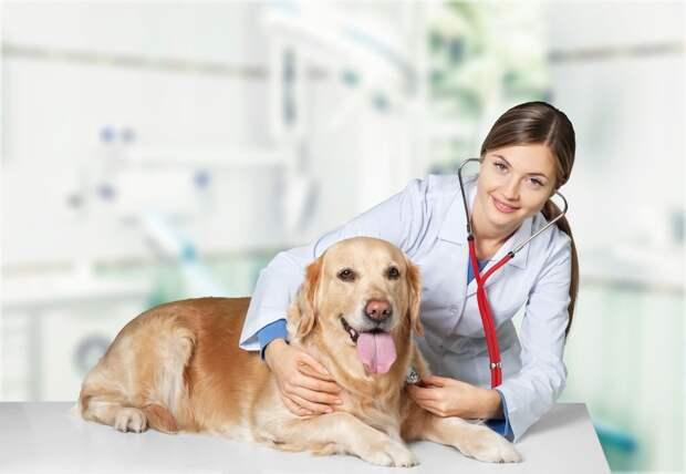 Современная ветеринарная клиника: ключевые положительные особенности