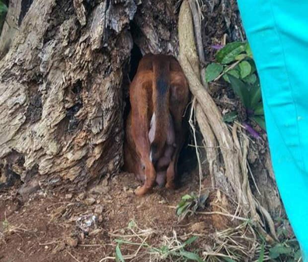 Собака-мама была так напугана, что спрятала своих малышей... в дереве