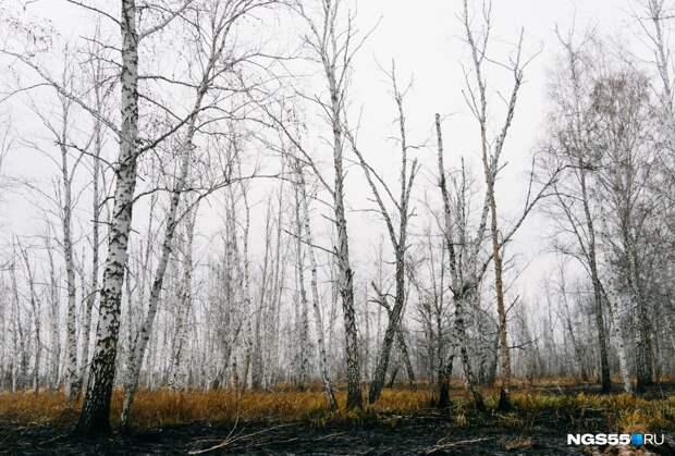 В Омской области горят леса на площади с половину Октябрьского округа. В двух районах введен режим ЧС
