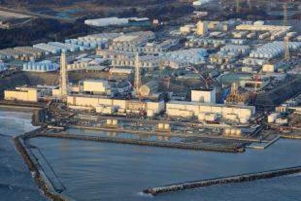 В Фукусиме выловили зараженную радиацией рыбу