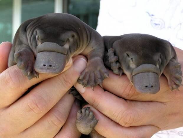 17 животных, которых вы вряд ли видели малышами!