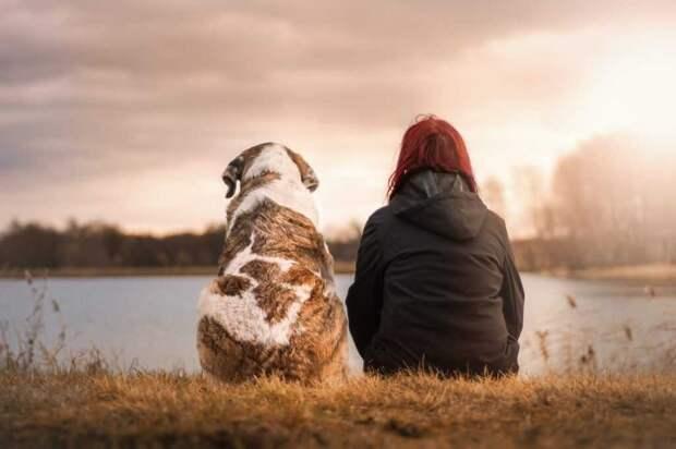 собаки моральная компенсация