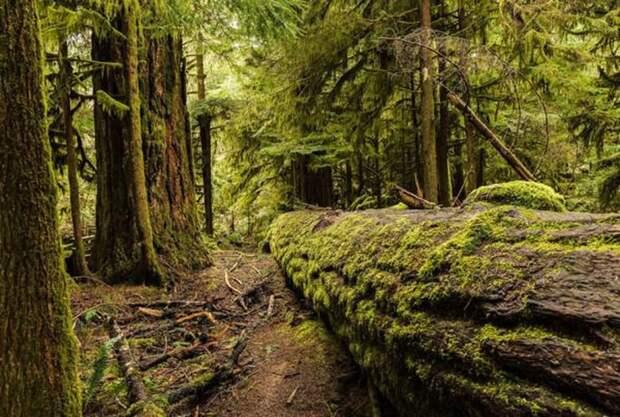 Затерянное японское поселение. \ Фото: baomoi.com.