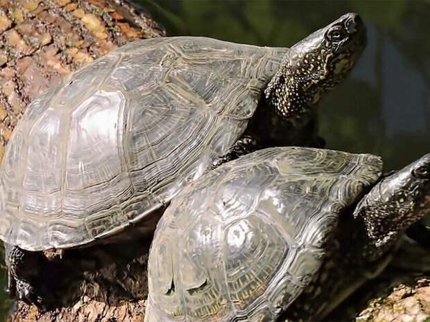 """Болотных черепах обнаружили в парке """"Кузьминки-Люблино"""""""