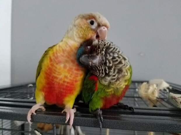 Вот почему животным не нужны слова, чтобы выразить свою эмоцию