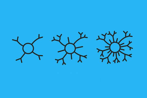 Нейропластичность —что это?
