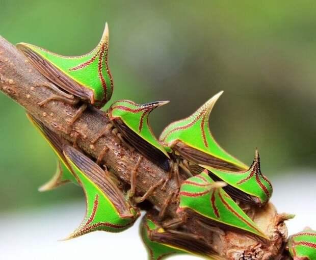 11 невероятно редких животных, которые выглядят как выдуманные существа