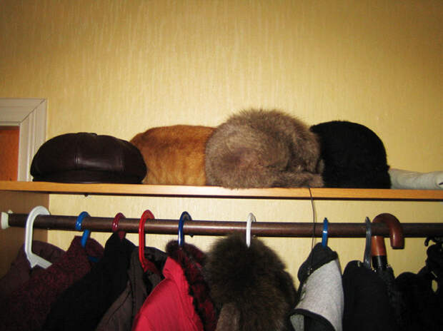 Воскресная загадка: найди кота