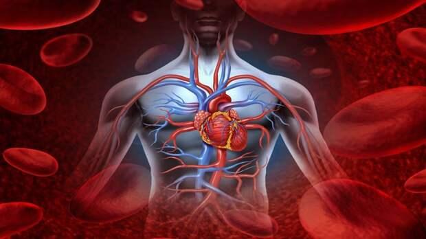 Аневризма аорты: лечение аневризмы, диагностика и операция