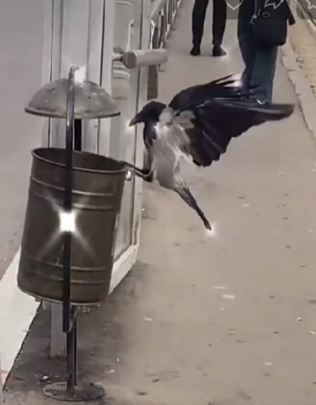 Фото дня: ворона из Бабушкинского устроила «битву» с урной