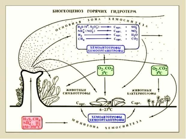 Там, где невозможен фотосинтез, происходит процесс, открытый российским ботаником. /Фото: winstein.org