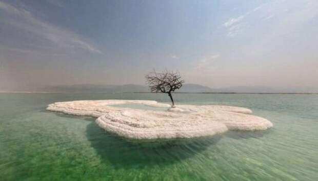 Дерево жизни: тайна одинокого растения посреди Мертвого моря