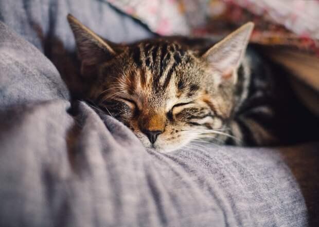 Почему нельзя брать кота за шкирку