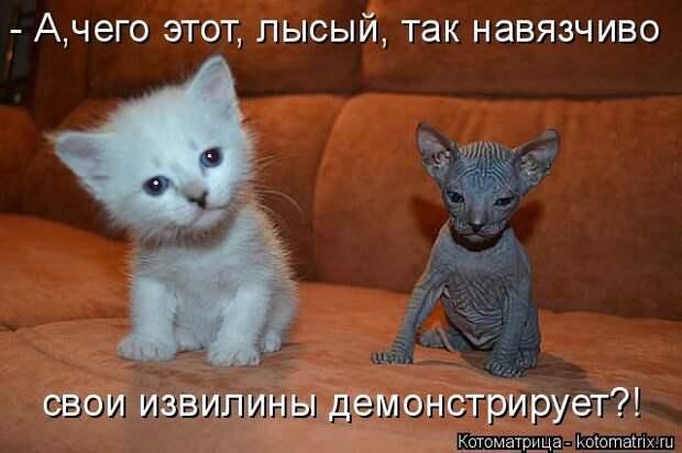Забавные котоматрицы для отличного настроения!