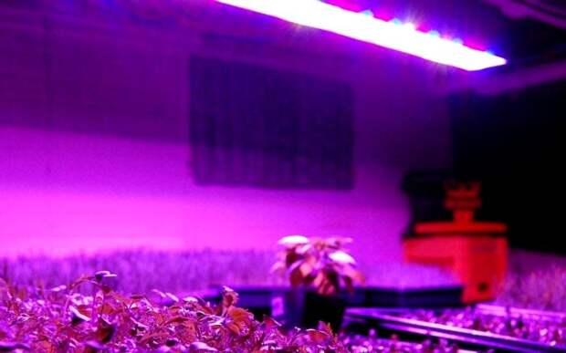 Растениеводство многим обязано открытию российского ученого. /Фото: lampaexpert.ru
