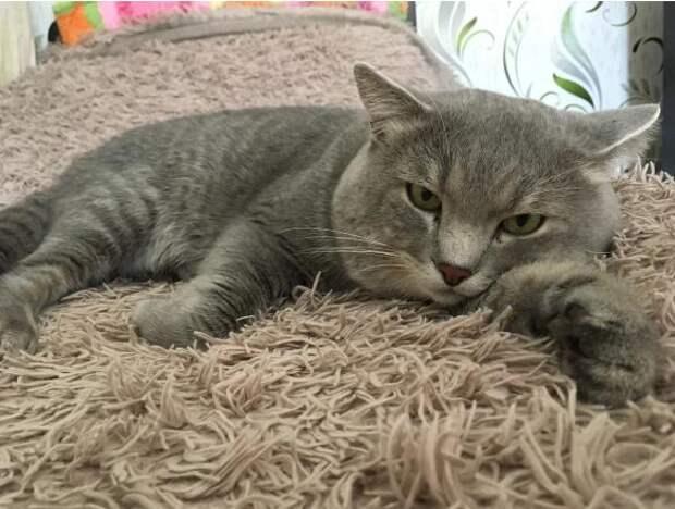 Кот вернулся к бывшим хозяевам, которые два года назад отдали его в хорошие руки