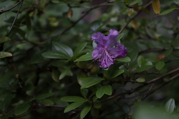 В тверском Ботаническом саду в середине августа наступил апрель