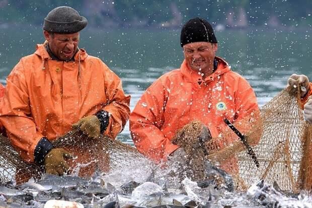 Росрыболовство объяснило неравномерные квоты на вылов рыбы между Россией и Украиной