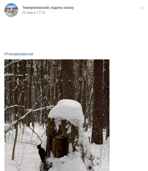 Фото дня: самый крупный дятел России поселился в Тимирязевском лесу